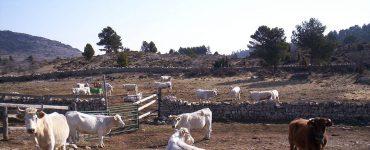En la escuela de pastores se forma a gente que quiera vivir de la ganadería.