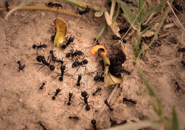 Los hormigueros como ejemplo de logística inteligente