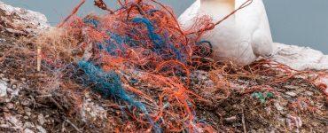El banco pretende luchar contra el problema de los plásticos en los animales.