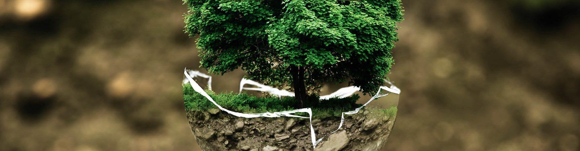 La protección del medioambiente es una de las áreas que suelen trabajar en la RSC.