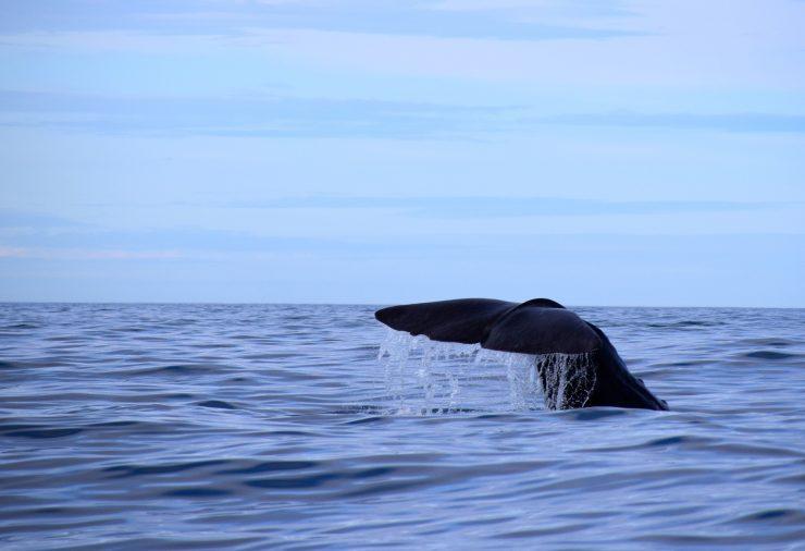 La declaración del ´Corredor de migración de cetáceos del Mediterráneo´ supone reconocer la necesidad de proteger esta zona.