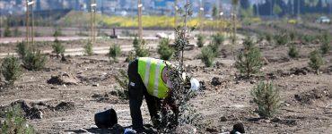 La Fundación Aquae se ha encargado de la plantacion de árboles en Alicante, Granada, Valladolid y Zamora