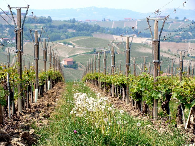 El proyecto Perfect Life busca alternativas a los pesticidas en el cultivo de cítricos y viñedos.