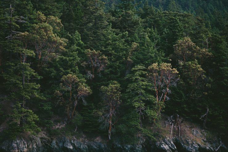 Los bosques son un de los frentes para luchar contra el cambio climático.