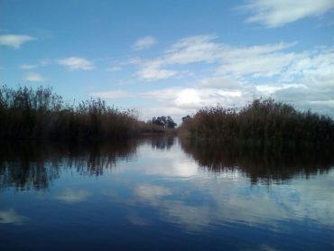 Las lluvias de este otoño han permitido que El Hondo celebre sus tres décadas acogiendo a millares de aves.