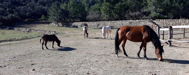 El refugio para caballos abandonados lo gestiona la Asociación Arcadia.