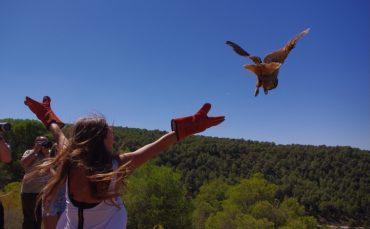 En los Los centros de recuperación de fauna, como el de La Granja, trabajan para reintroducir las especies en su medio natural.
