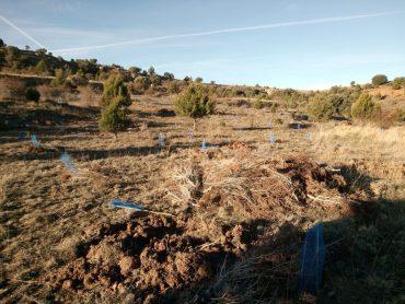 Los bosques semilla serían pequeñas áreas a partir de las cuales ayudar a la regeneración de una zona con problemas de vegetación.