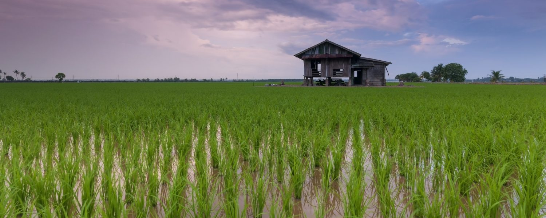 La huella hídrica del arroz le sitúa a la cabeza en el apartado de cereales porque es de los que más agua consume: 1.700 litros para medio kilo.