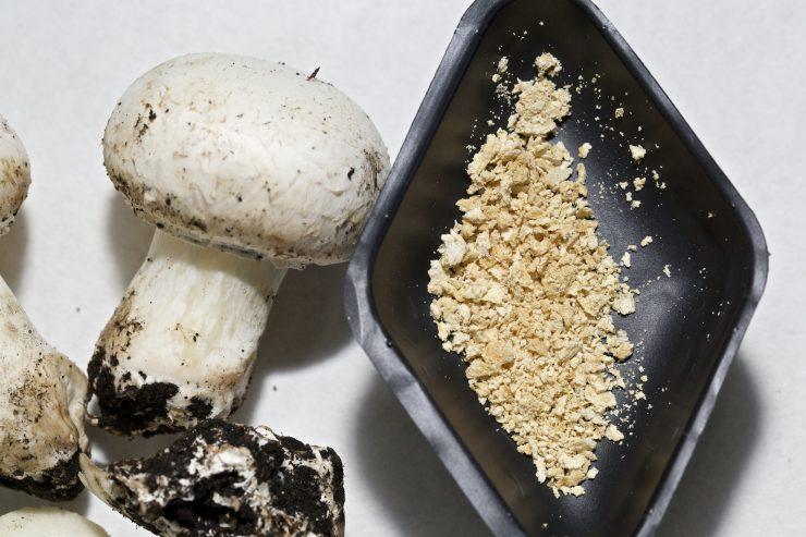 Los residuos del champiñón son la base del proyecto Funguschain