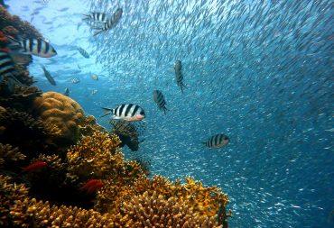 The Nature Conservancy creó una aplicación web basada en AI para analizar imágenes subacuáticas geoetiquetadas publicadas en Flickr.