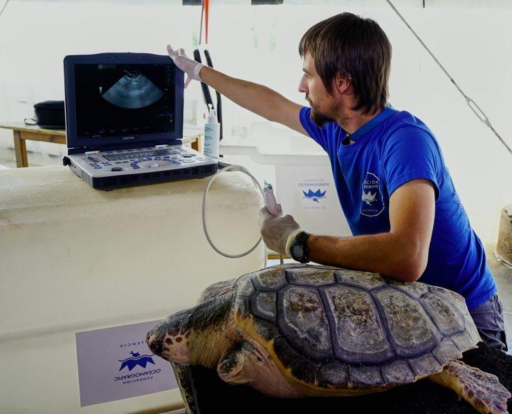 Este centro de recuperación de fauna marina trata a una media de ochenta tortugas al año.