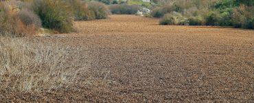 El control del camalote o jacinto de agua (Eichornia crassipes), en el que España ha invertido 35 millones de euros desde el año 2005 y que en Portugal amenaza con causar enormes pérdidas económicas y ambientales, ha trasladado al país vecino el debate sobre la conveniencia de usar productos químicos. En la imagen, vista de la presa de Furadouro (Mora) en el río Raia, afluente del Tajo portugués. EFE/J.J.Guillen
