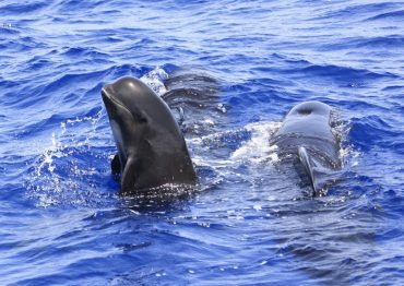El sistema investiga las especies en Cabo Tiñoso y Mazarrón. Foto Rosa Canales