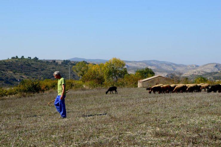 Esquellana se lanzó como cooperativa para proteger la oveja guirra y su lana.
