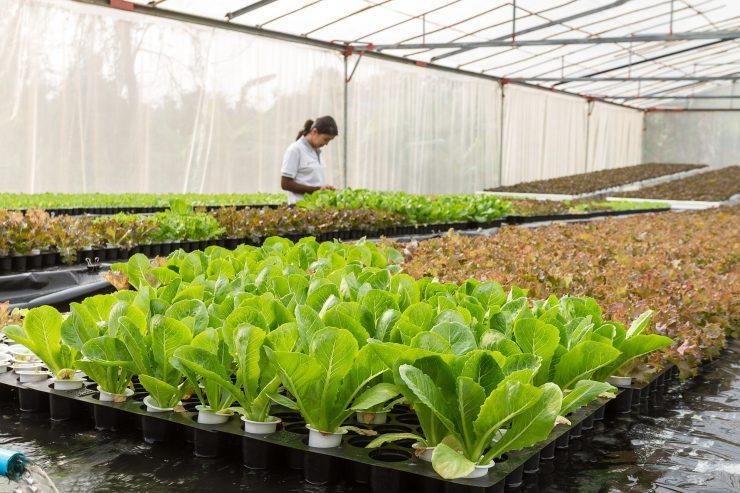 Las propuestas para la industria agrícola apuestan por la reutilización de recursos.