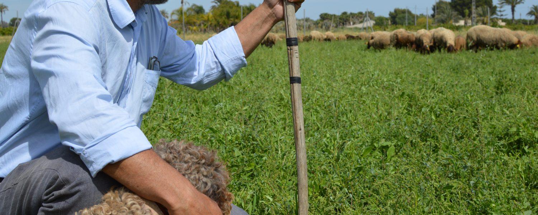 Paco Rubio trabaja tanto de técnico como de pastor en Elche. Su programa con las ovejas guirra destaca por el carácter circular de la propuesta.