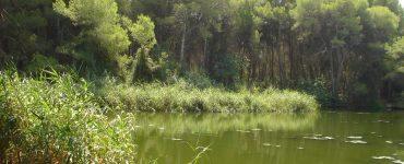 GUARDIAN se ha ideado como un proyecto medioambiental frente al cambio climático para contribuir a la protección de la biodiversidad y las personas de la Vallesa
