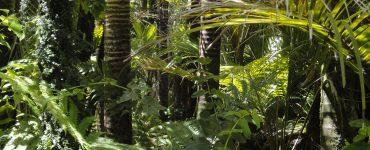 El incendio en la Amazonia es una catástrofe para el conjunto de la humanidad que plantea retos globales, más allá de fronteras o ideologías.