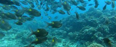 La medida anunciada por el Gobierno de Palaos busca proteger su rico ecosistema marino en el que basan gran parte de su atractivo turístico. / Palau Visitors Authority