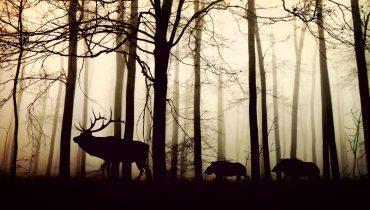 Jabalíes, ciervos, cabras montesas… Esta clase de mamíferos ungulados aumenta su población y con ello, los conflictos.
