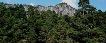 Los bosques de Soria son los que más madera han subastado en el último trimestre de 2019.