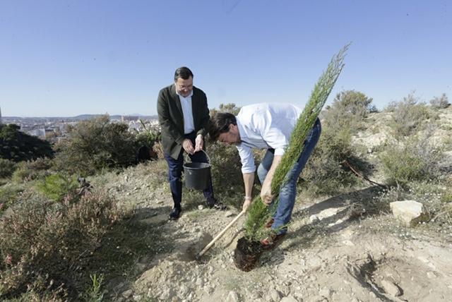 Masatusa —que forma parte del gran árbol empresarial que constituye el Grupo Vectalia—, organizó la plantación de trescientos árboles en el Benacantil.