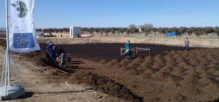 El proyecto Life Regrow trabaja en Mora para recuperar las balsas de alpechín.