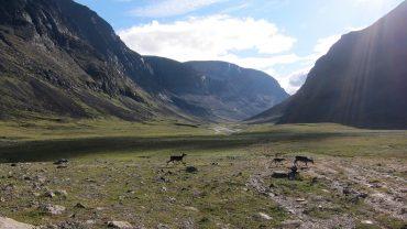 Este invierno el pastoreo de renos en Suecia, por ejemplo, ha sufrido las dificultades de las altas temperaturas.