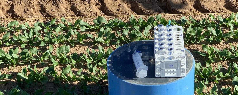 El proyecto RETOS busca cómo ofrecer una agricultura intensiva y sostenible. Fuente: UMH