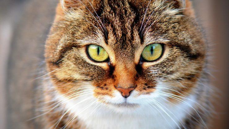 El laboratorio Iberogen ha creado una prueba para detectar coronavirus en mascotas y otros animales..