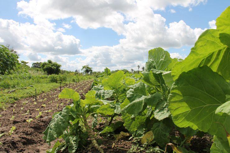 La UMH dirige el programa Go Innowater para mejorar la productividad agrícola en estos cultivos que valga tanto para grandes explotaciones como parcelas de menor tamaño.