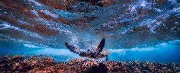 El Atles del mar tiene un enfoque didáctico que trata los peligros que acechan a estos ecosistemas.