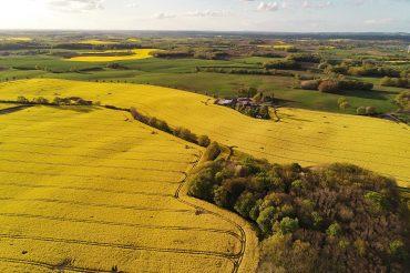 Un estudio resalta la importancia de la adecuada gestión forestal como agente clave frente al cambio climático