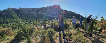 Plantación de Vectalia #PorElClima