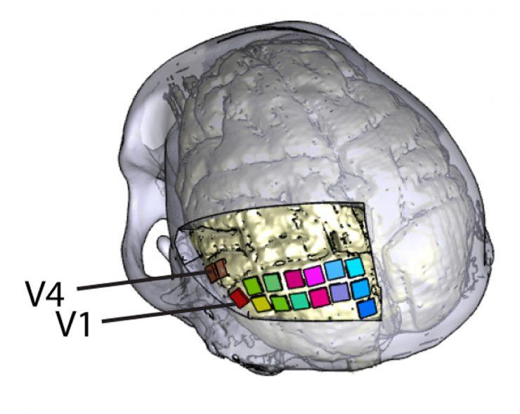 Una neuroprótesis para ayudar a personas ciegas a percibir formas y letras