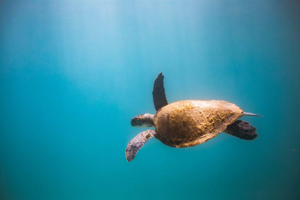 Mantener la biodiversidad en los océanos es una de las metas que se marcan en la Unesco. Foto: Marcos Paulo Prado