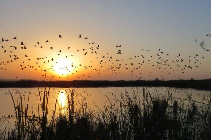 Infraestructuras verdes, eliminar fitosanitarios, un pacto social y la gestión del agua: ejes de Hidraqua para preservar ecosistemas como el Tancat de Milia.