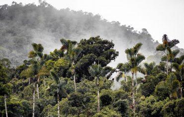 Un estudio científico mide durante dos décadas los cambios en los flujos de carbono en la biomasa leñosa del planeta. El estudio ha sido liderado por la NASA en colaboración de varios centros de investigación internacionales como la Unidad Mixta de investigación CTFC - Agrotecnio y la Universitat de Lleida.